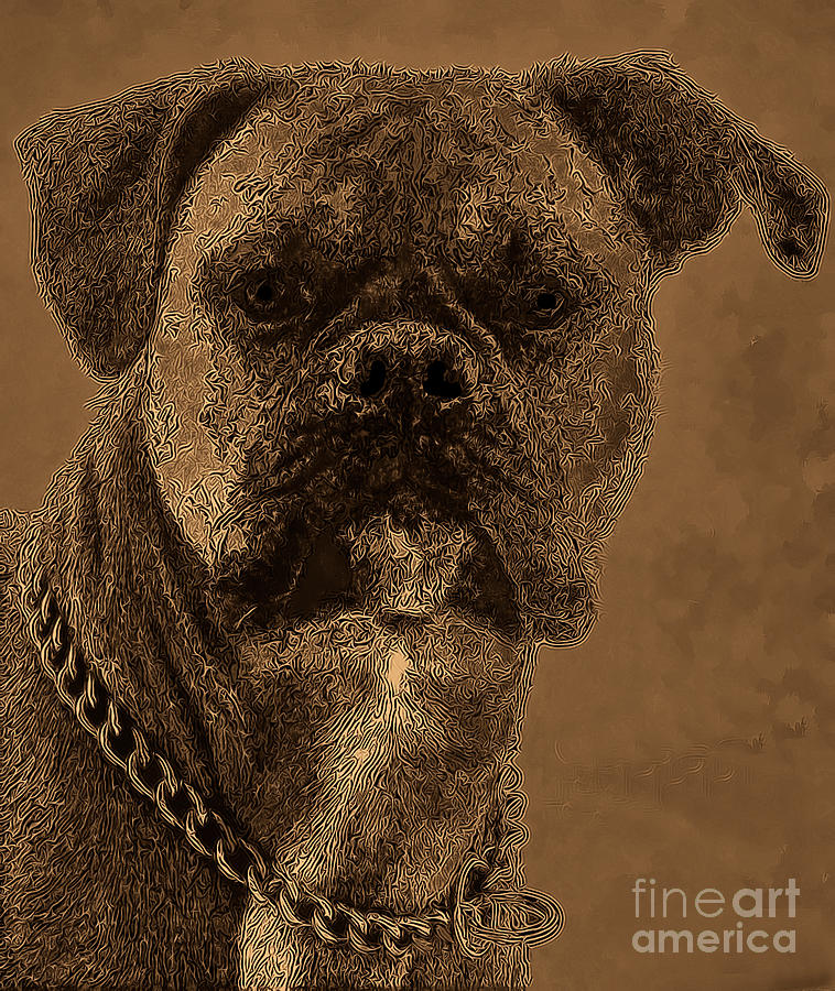 Dog Photograph - The Modern Boxer Bulldog by Lesa Fine