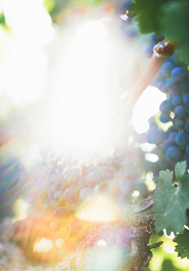 Landscape Photograph - The Modern Grape 1 by Clint Brewer