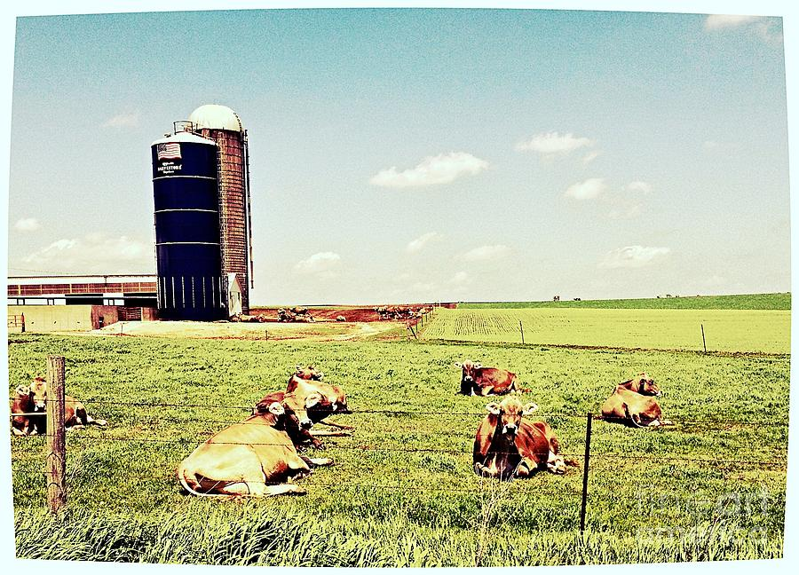 Iowa Farm Photograph - The Morning Gossipers by Garren Zanker