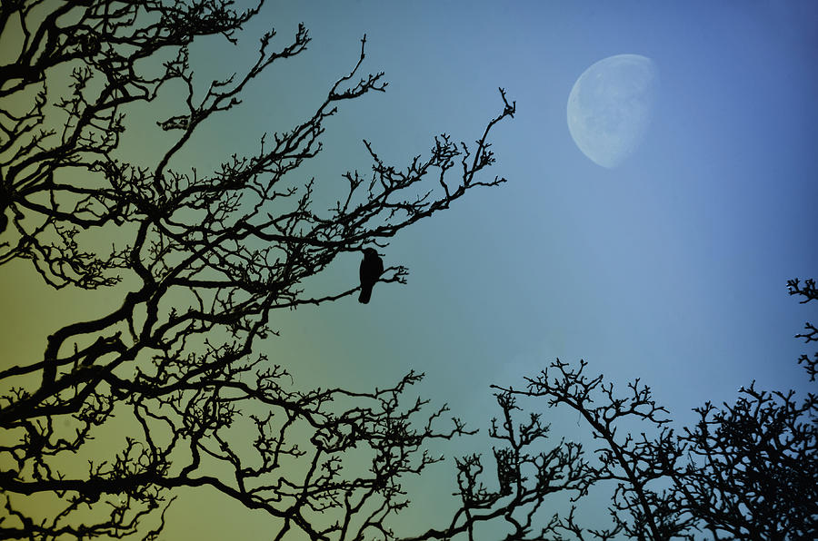 Morning Photograph - The Morning Moon by Bill Cannon