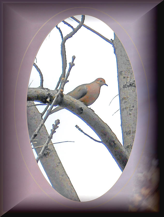 Bird Photograph - The Mourning Dove by Patricia Keller
