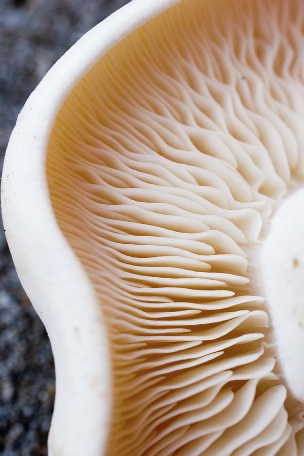The Mushroom Effect Photograph by Tim Green