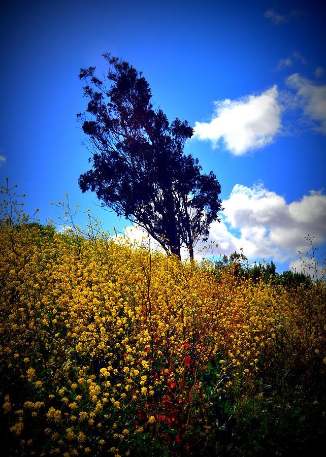 Mustard Weed Photograph - The Mustard Hillside by Lisa Holland-Gillem