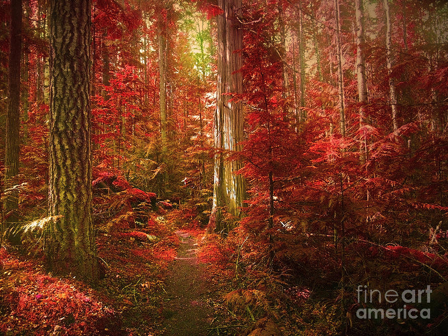 Trees Photograph - The Mystic Forest by Tara Turner