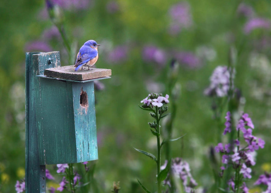 Bird Photograph - The New Landlord by Lori Deiter