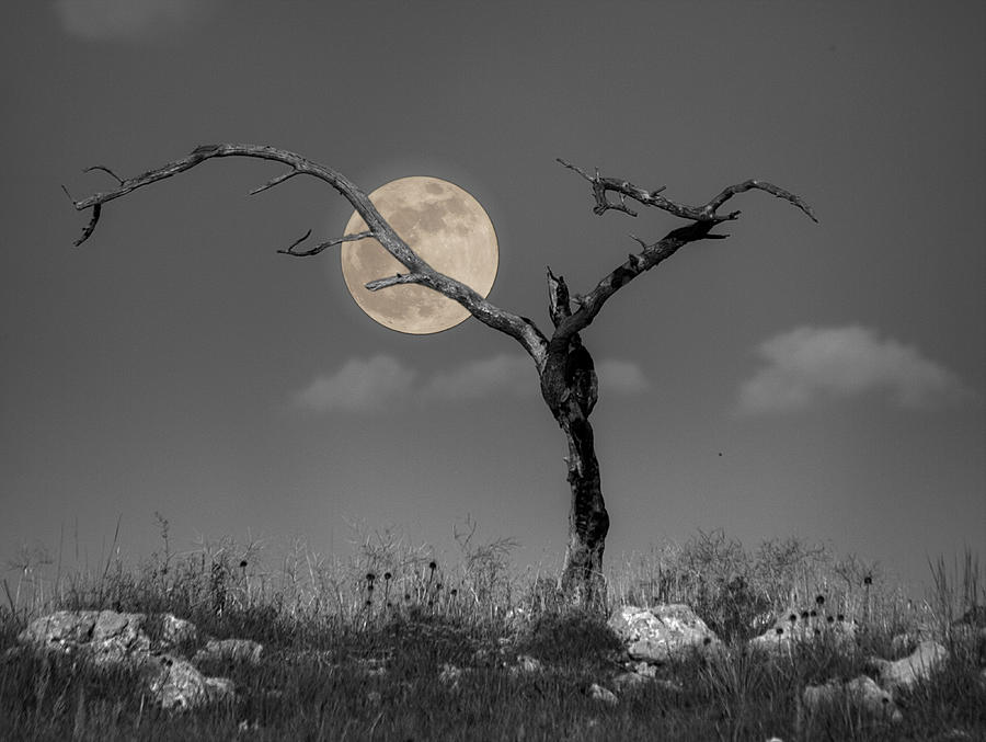 Moon Photograph - The Night by HW Kateley