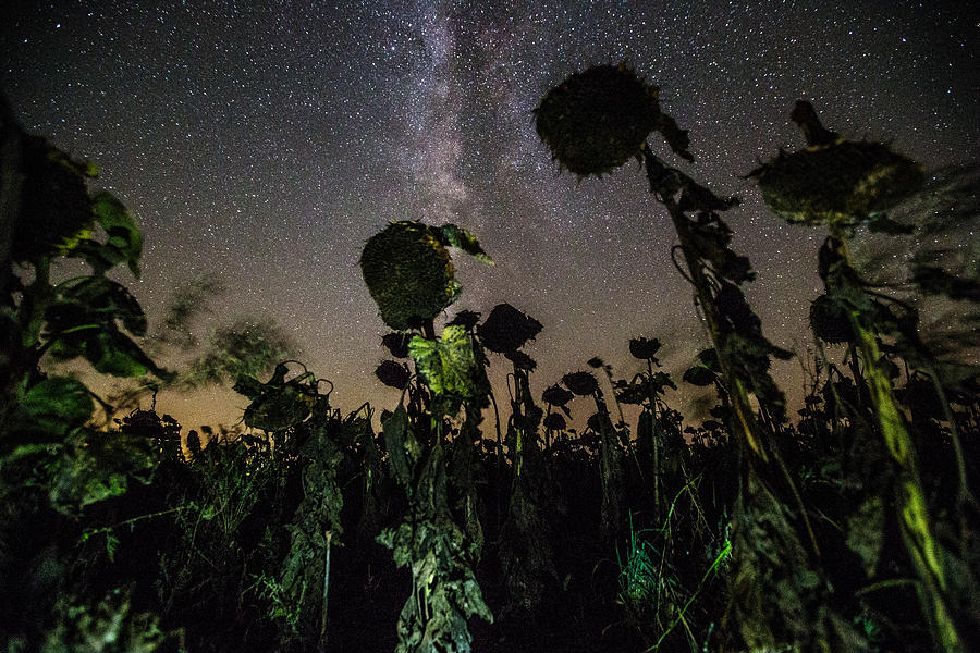 Plants Photograph - The Night Of The Triffids by Aaron J Groen