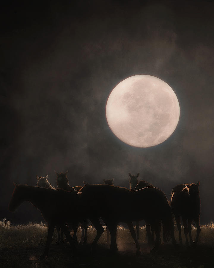 Equine Photograph - The Night Shift by Ron  McGinnis
