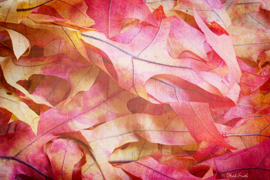 Oak Photograph - The Oak Leaf Pile by Heidi Smith