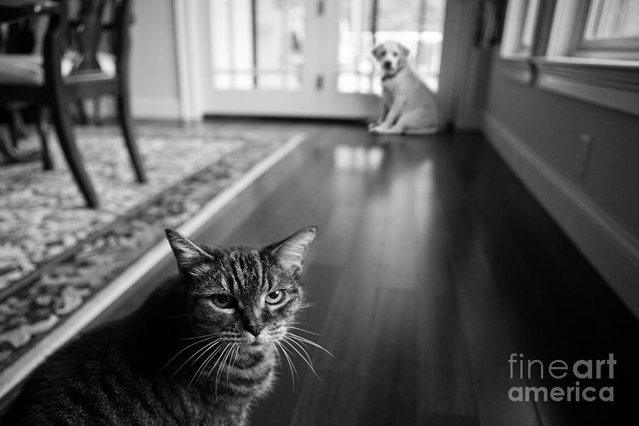Cat Photograph - The Old Cat And The New Puppy by Diane Diederich
