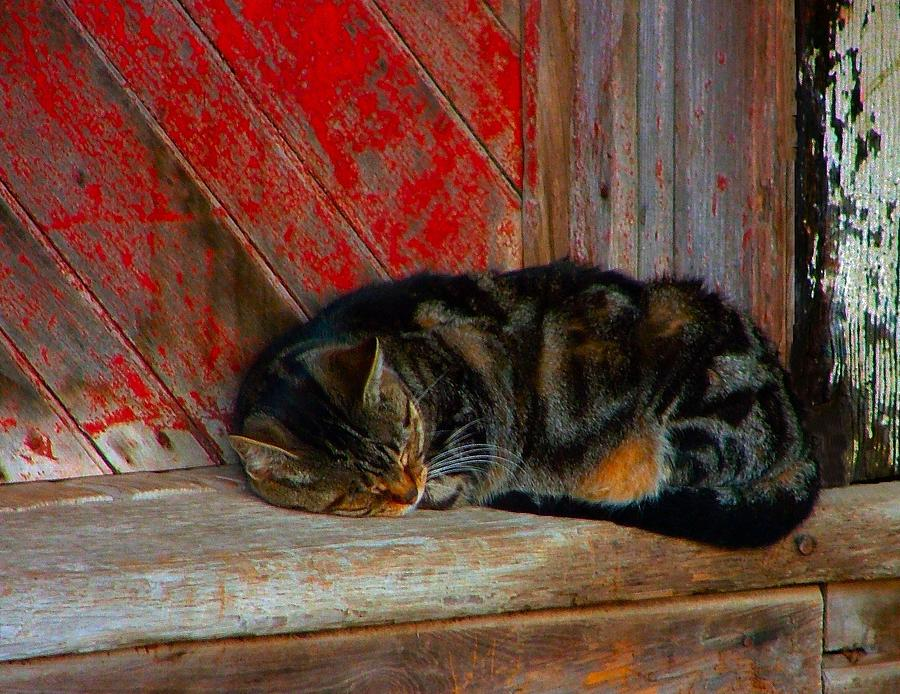 Cats Photograph - The Old Mill Cat by Julie Dant