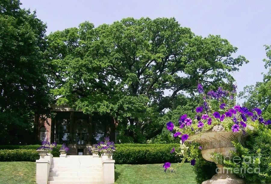 Wheaton Photograph - The Oldest Oak by Laurie Eve Loftin