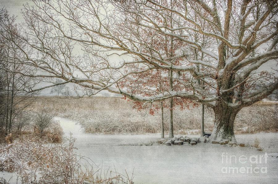 The Old Oak Tree by Pamela Baker
