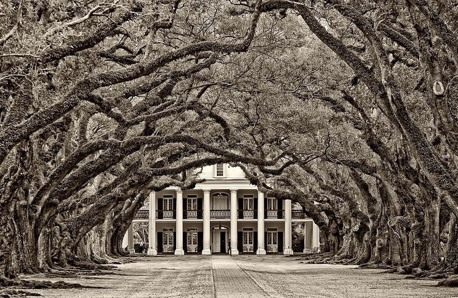 Oak Alley Plantation Photograph - The Old South Sepia by Steve Harrington
