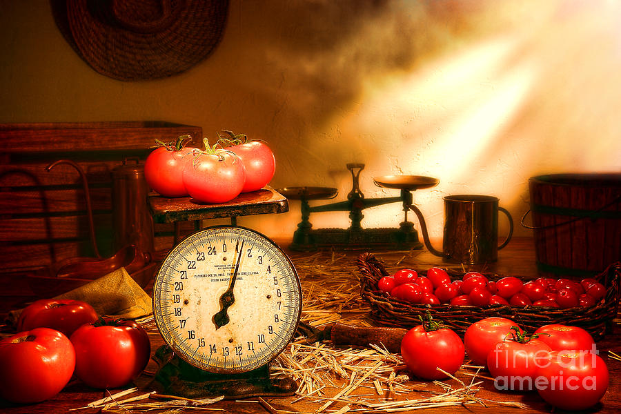 Tomatoes Photograph - The Old Tomato Farm Stand by Olivier Le Queinec