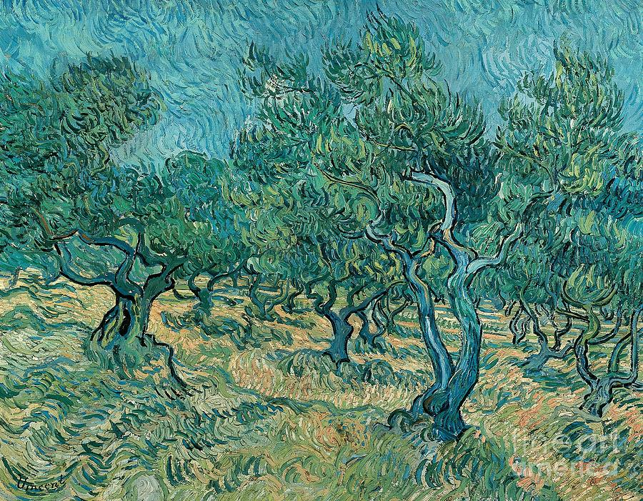 Art; Painting; 19th Century Painting; Europe; Nederland; Holland; Van Gogh Vincent; Post-impressionism Painting - The Olive Grove by Vincent van Gogh