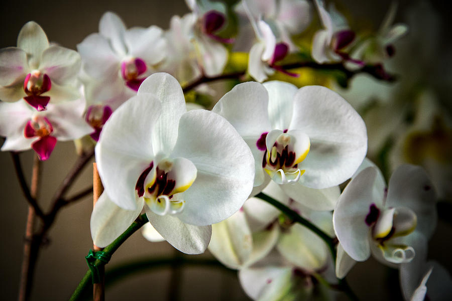 Nc Photograph - The Orchid Sisters And Backup Singers by John Haldane