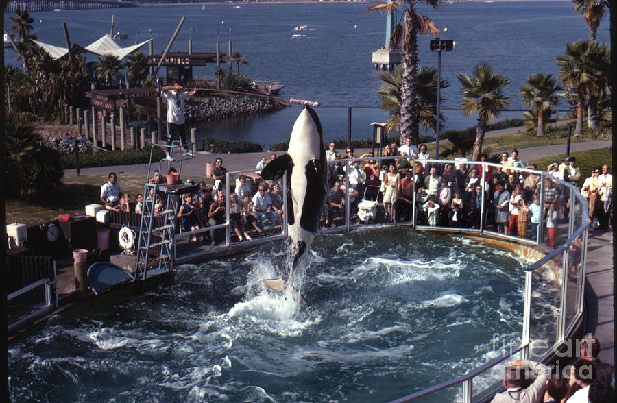 The Original Shamu Orca Sea World San Diego 1967