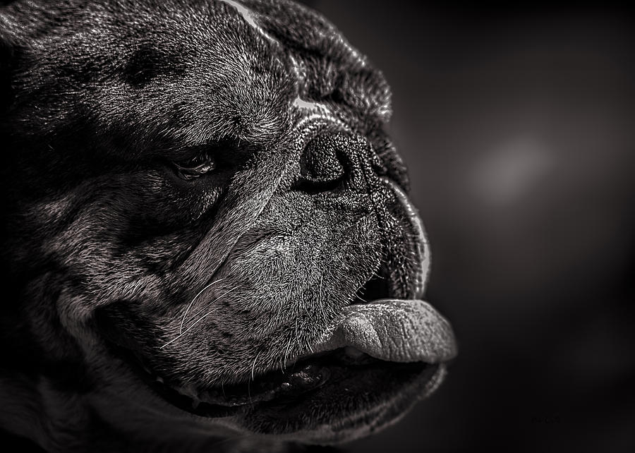 Dog Photograph - The Other Dog Next Door by Bob Orsillo