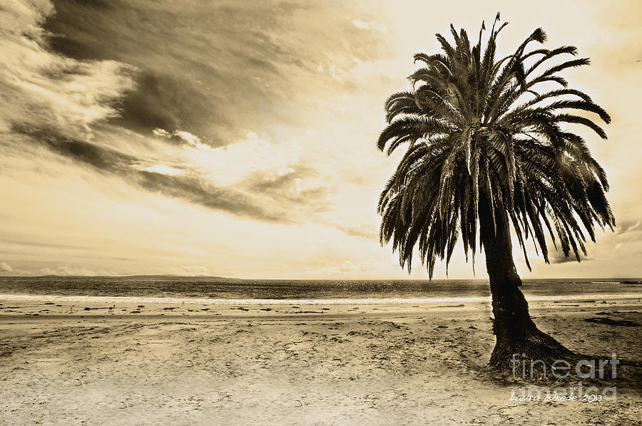 Gaviota Photograph - The Palm Swayed As The Storm On The Ocean Blew In by Artist and Photographer Laura Wrede