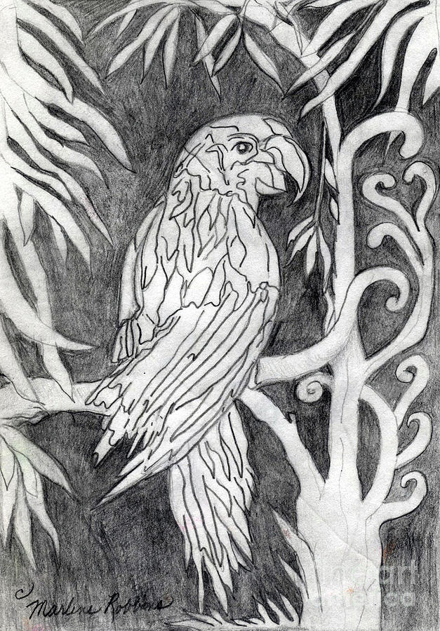 Bird Drawing - The Parrot by Marlene Robbins