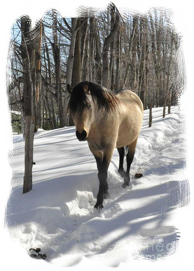 Horse Photograph - The Paso Fino Stallion Named Brio by Patricia Keller