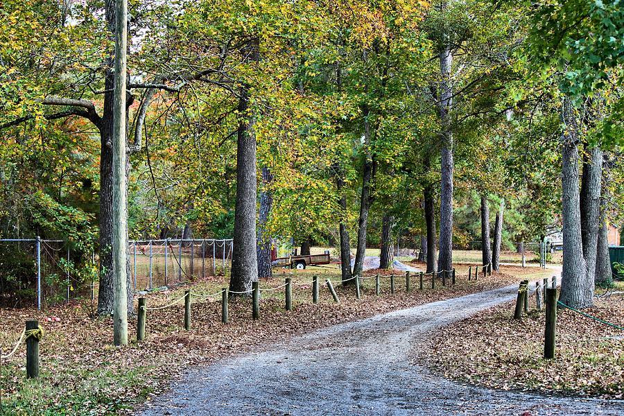 Tree Photograph - The Path by Carolyn Ricks
