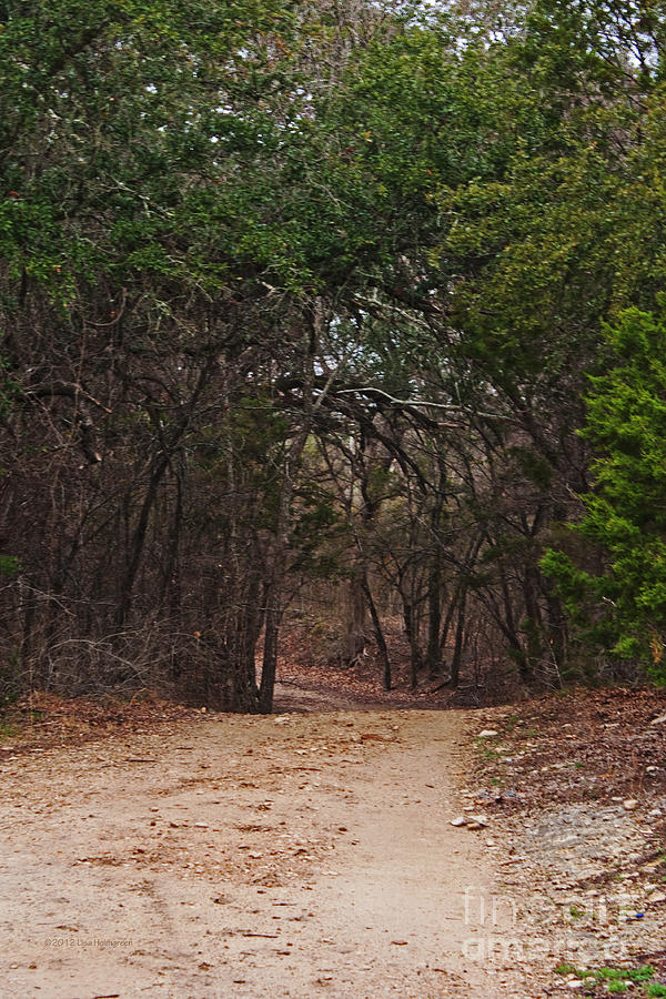 Dirt Path Photograph - The Path In The Woods by Lisa Holmgreen