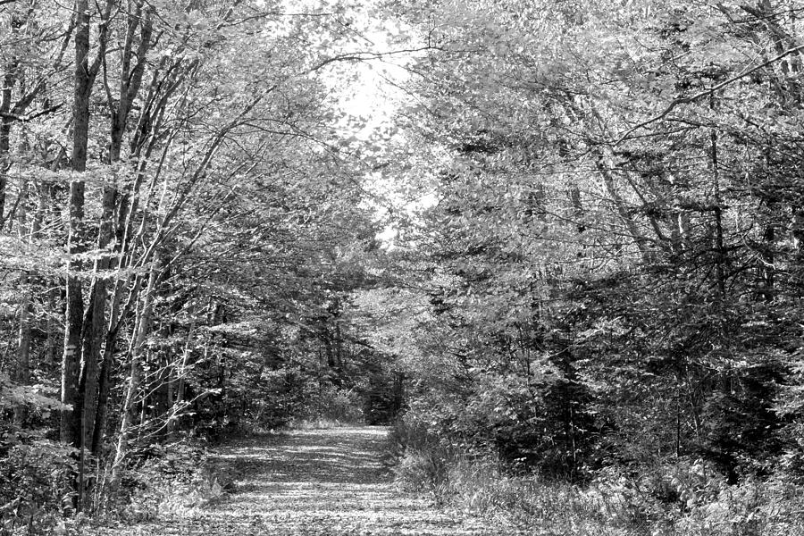 Landscape Photograph - The Path Less Traveled Black And White by Brett Pelletier