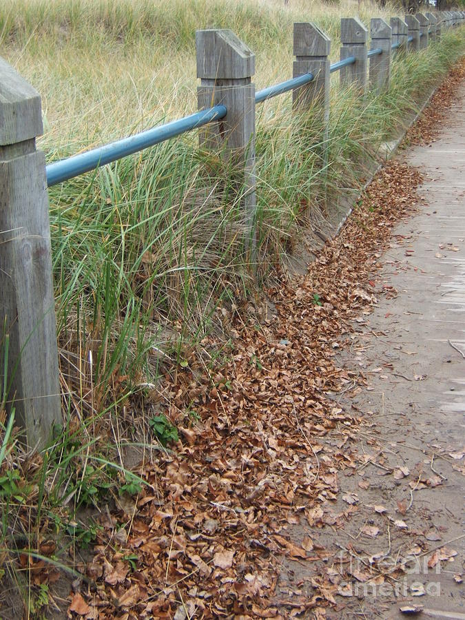 Path Photograph - The Path by Margaret McDermott