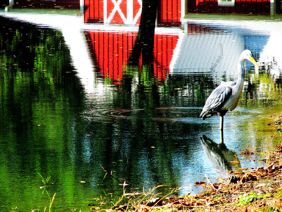 Barns Photograph - The Pelican Brief Stop by Tina M Wenger