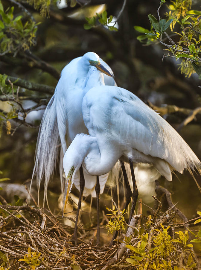 Heron Photograph - The Perfect Couple by Christina Manassa
