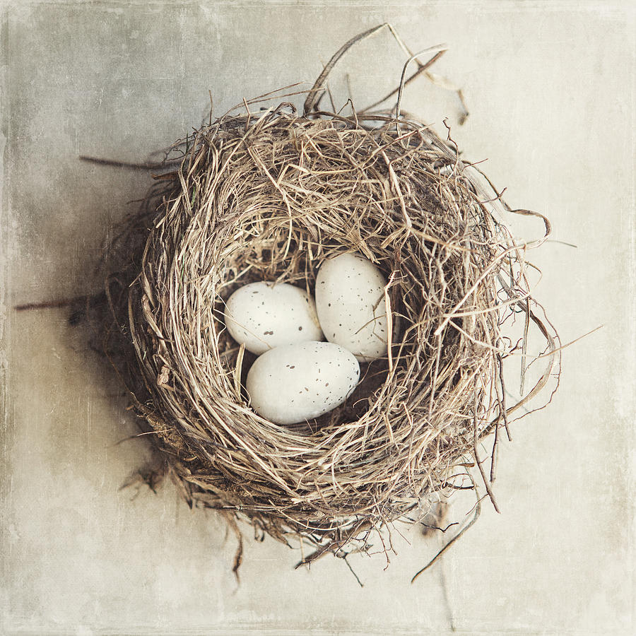 Bird Nest Photograph - The Perfect Nest by Lisa Russo