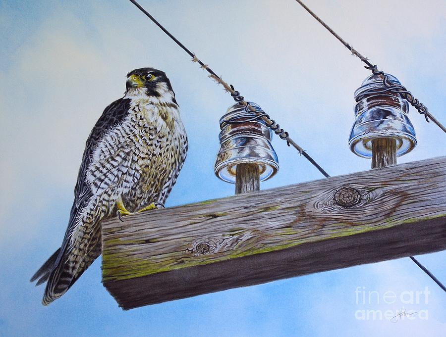 Peregrine Painting - The Perfect Predator by Greg and Linda Halom