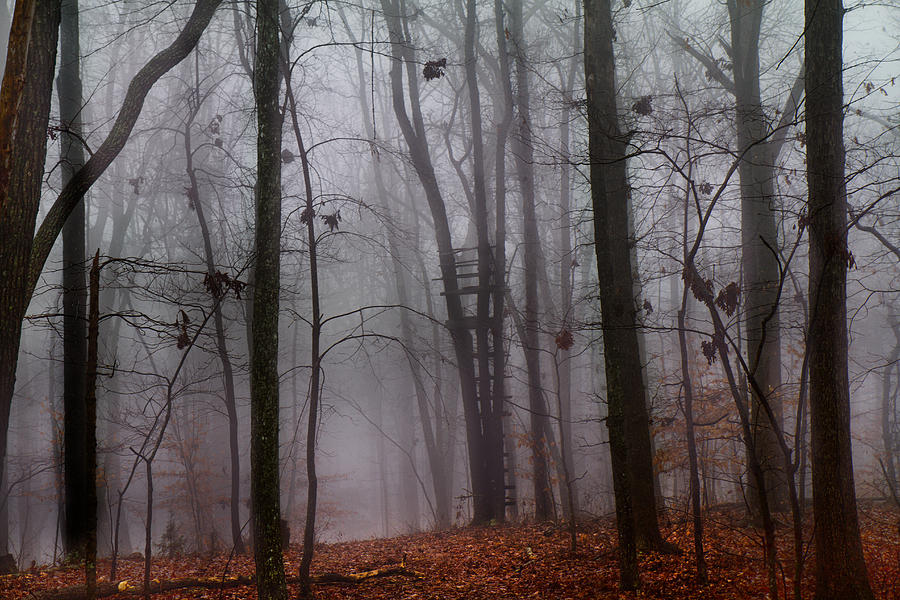 Forest Photograph - The Phantom Rises by Betsy Knapp