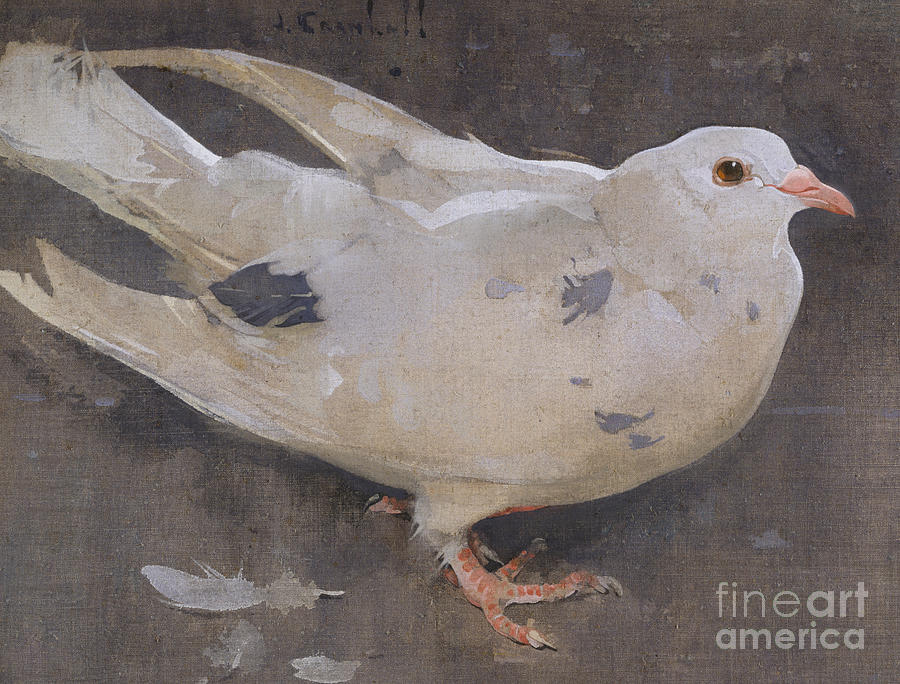 Bird Painting - The Pigeon by Joseph Crawhall