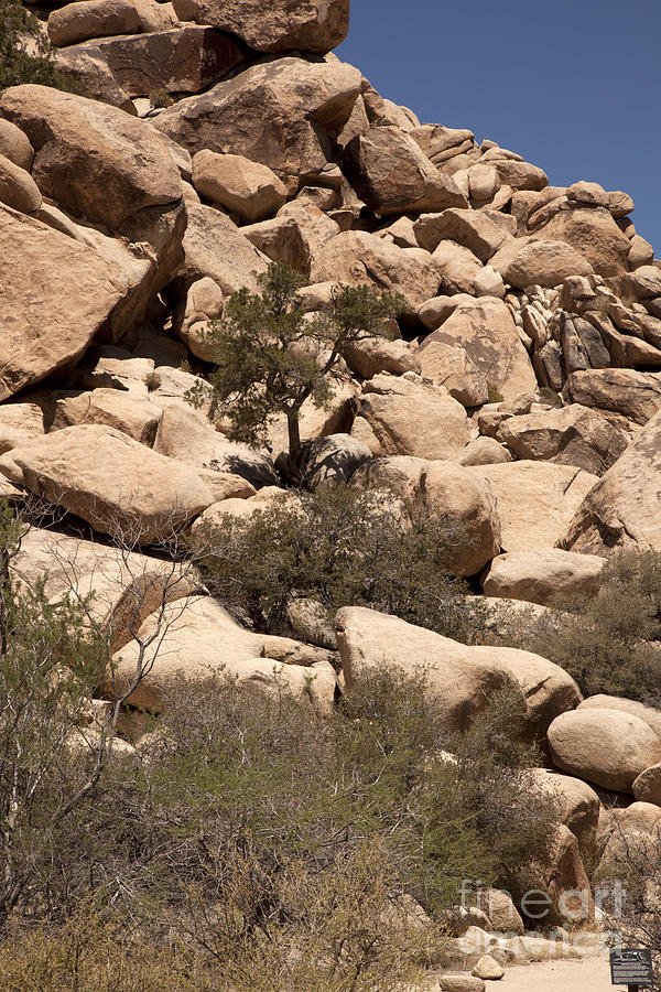 joshua Tree National Park Photograph - The Pile Is Home by Amanda Barcon
