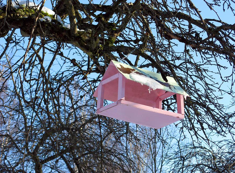 Pink Bird Feeder Photograph - The Pink Bird Feeder by Ausra Huntington nee Paulauskaite