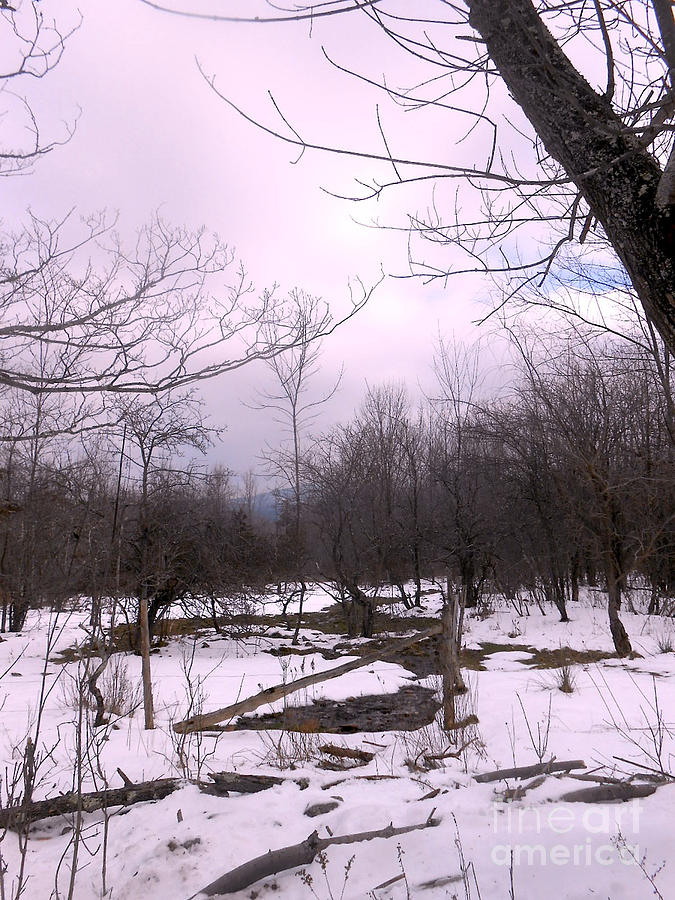 Snow Photograph - The Pink Winter Light On The Mountain Top by Patricia Keller