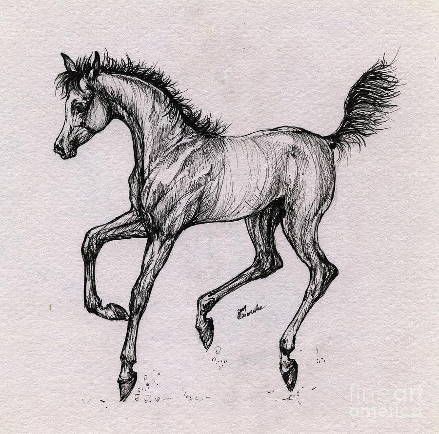 Foal Drawing - The Playful Foal by Angel Ciesniarska