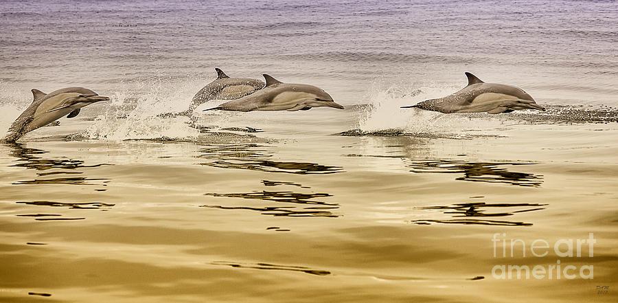 Dolphin Room Decor Print by David Millenheft
