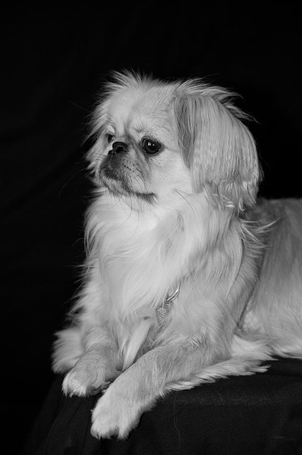 Animal Photograph - The Princess by Kristi Swift