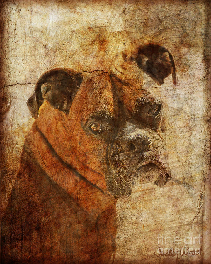 Dog Digital Art - The Question by Judy Wood