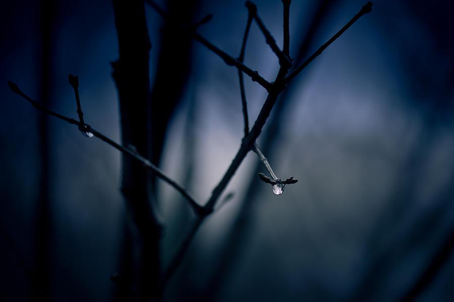 Rain Photograph - The Rain Song by Shane Holsclaw