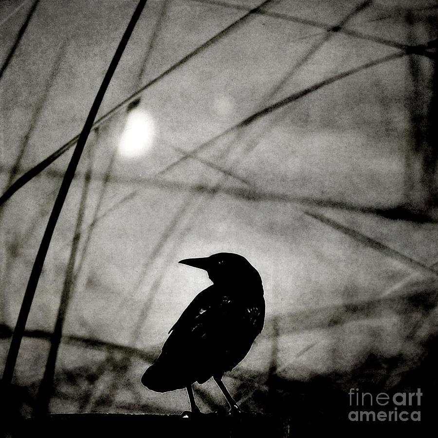 Raven Photograph - The Raven And The Orb by Sharon Kalstek-Coty