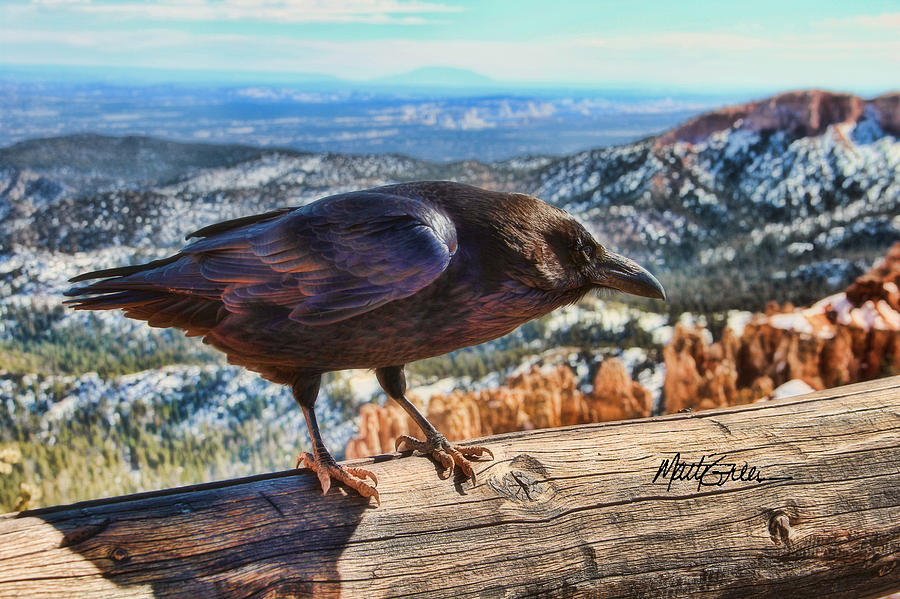 Raven Photograph - The Raven by Marti Green