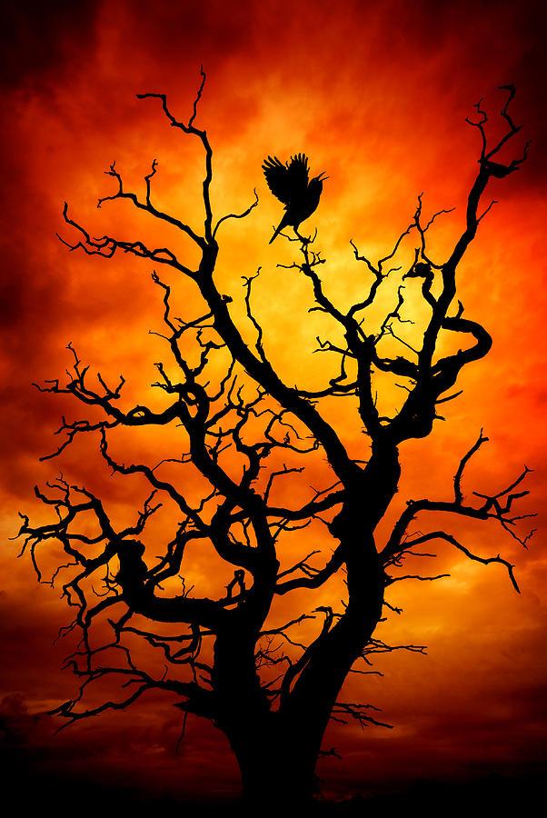 The Raven by Meirion Matthias
