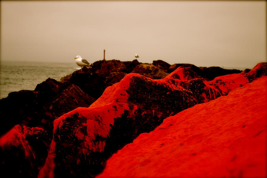 Seagull Photograph - The Red Dawn by Sheldon Blackwell