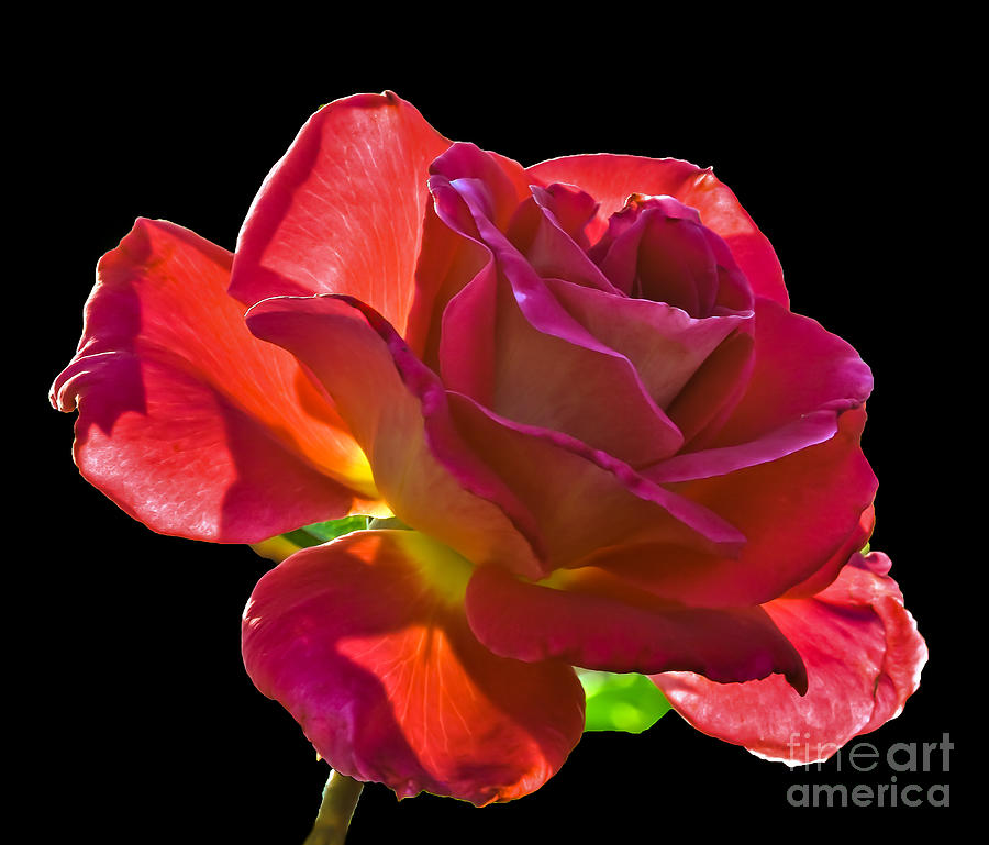Perennial Photograph - The Red One by Robert Bales