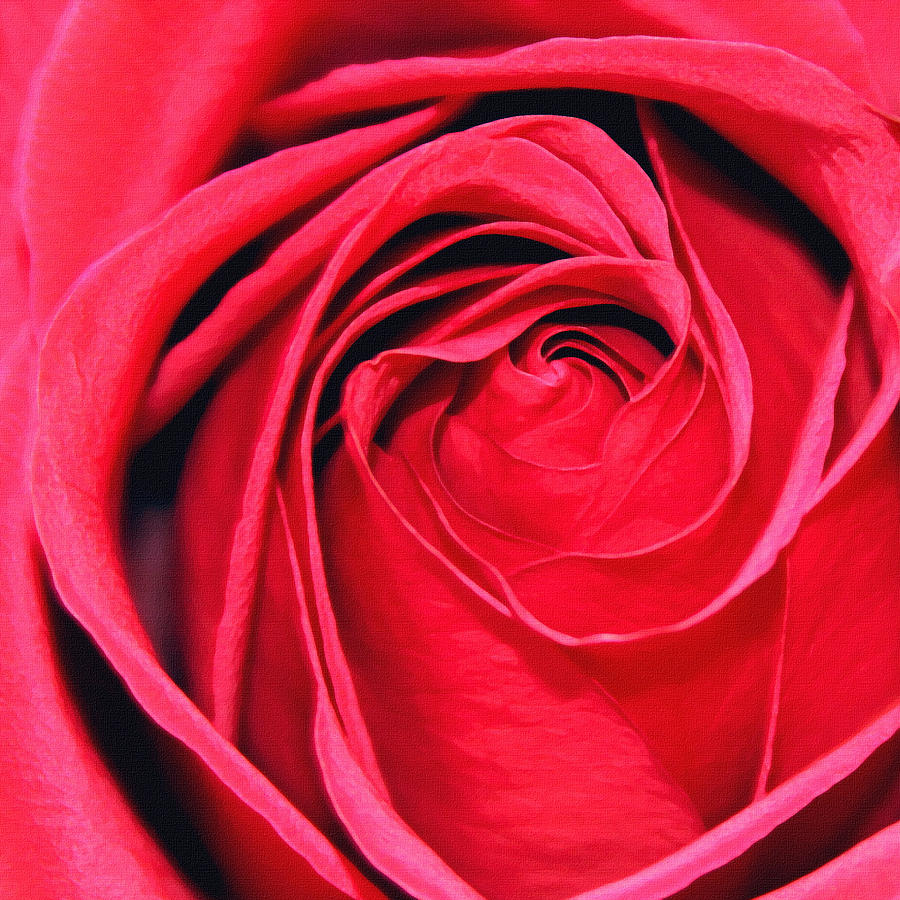 Red Rose Painting - The Red Rose Blooming by Karon Melillo DeVega